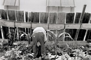 Eugene Roberts works in his garden - 1988