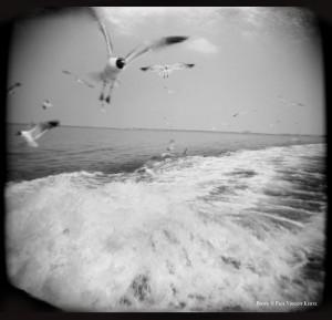 Seagulls - Bolivar Peninsula TX  7-2000